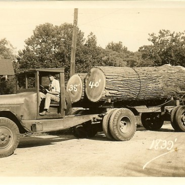 Nice Yellow Poplar veneer logs. Typically, the Heart was yellow-pale green with a soft texture.  These kind of logs made a premium quality veneer.  We don't see logs like these much any more.  We wish we knew who the driver is.  Does anyone know what year and make the truck is?